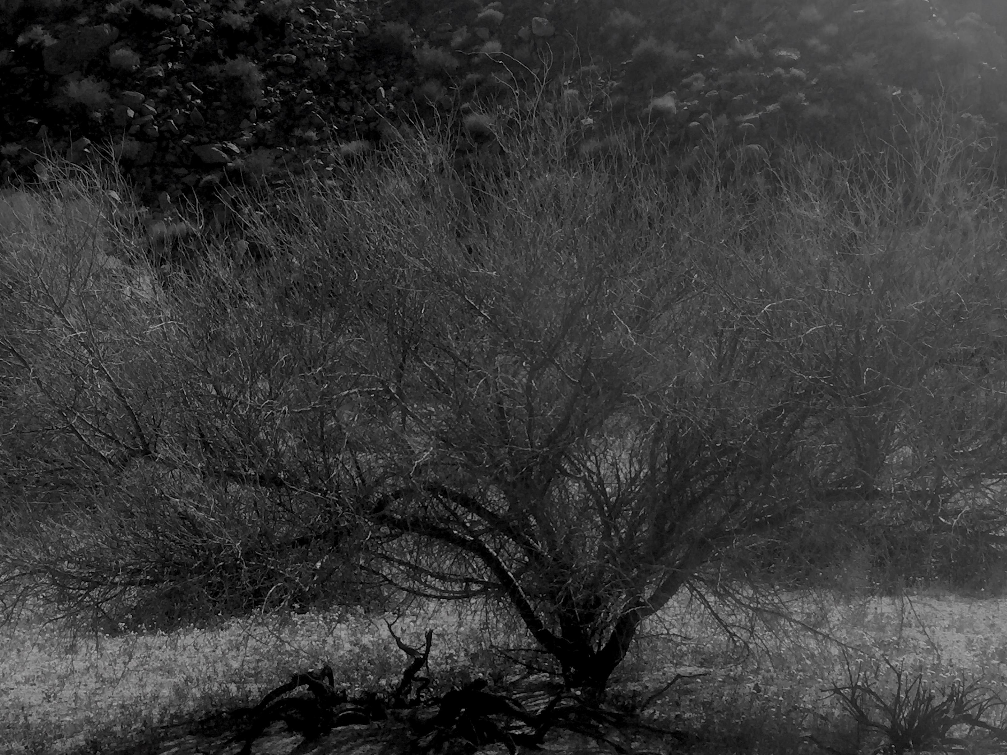 Twig tree B&W